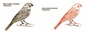 ilustración melaninas de canarios oxidaod