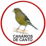Botón enlace canarios de canto