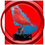 Botón enlace canarios de color