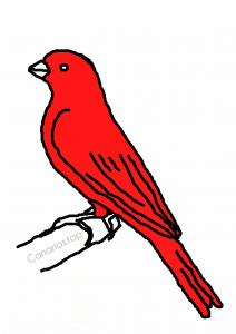 dibujo canario rojo intenso