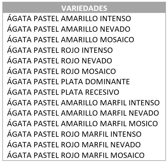 TIPODE DE CANARIOS ÁGATAS GATAS PASTEL