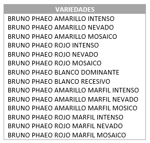 Tipos de canarios bruno phaeo